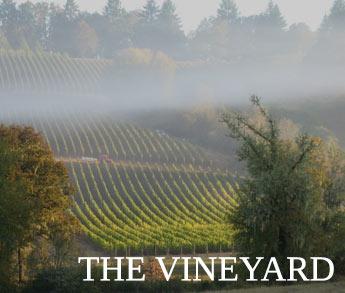 Front-Vineyard