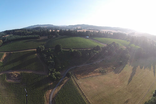Lazy River Vineyard Aerial